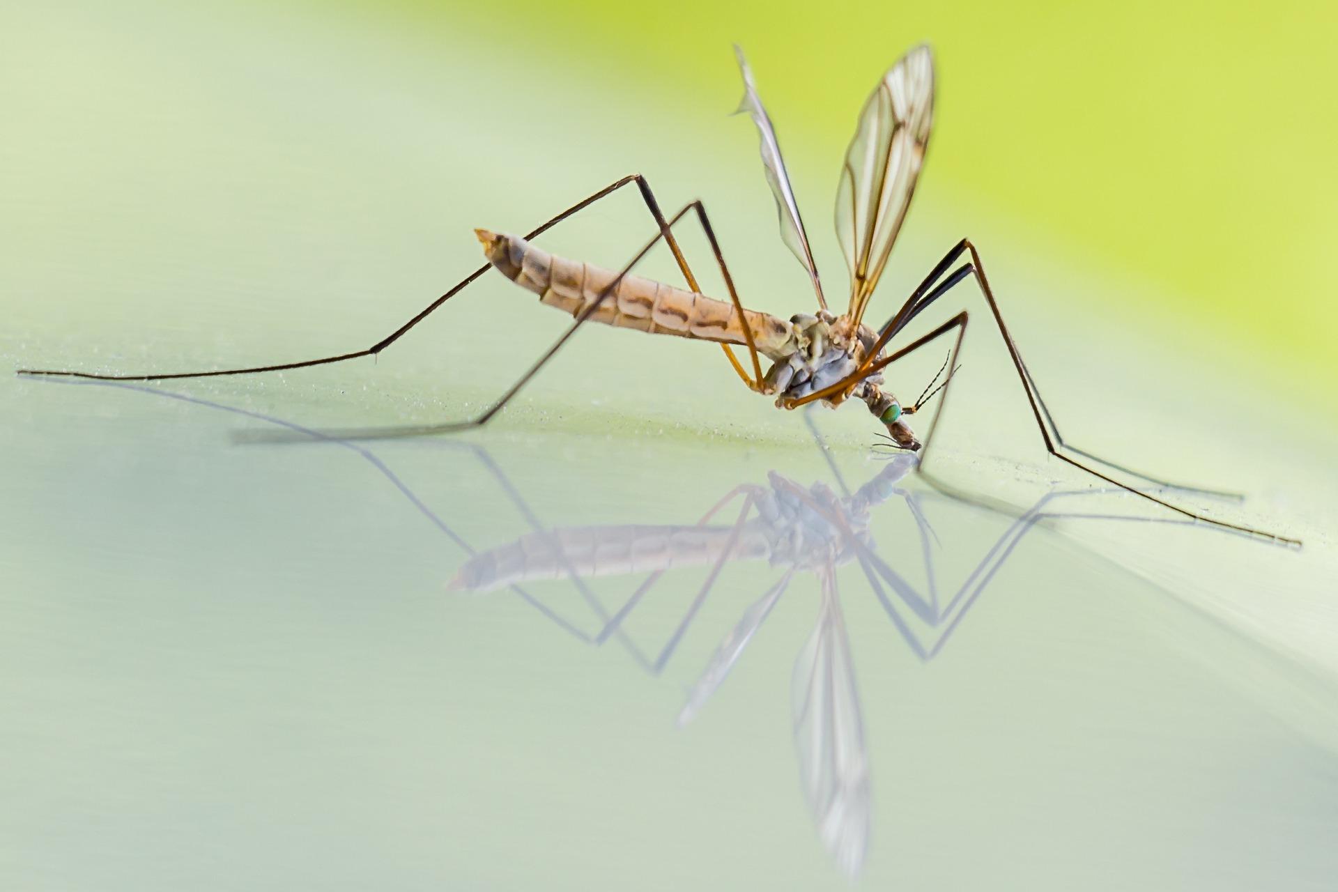 co odstrasza owady