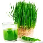 Na co pomaga trawa pszeniczna, czyli moc chlorofilu