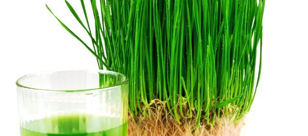 na co pomaga trawa pszeniczna